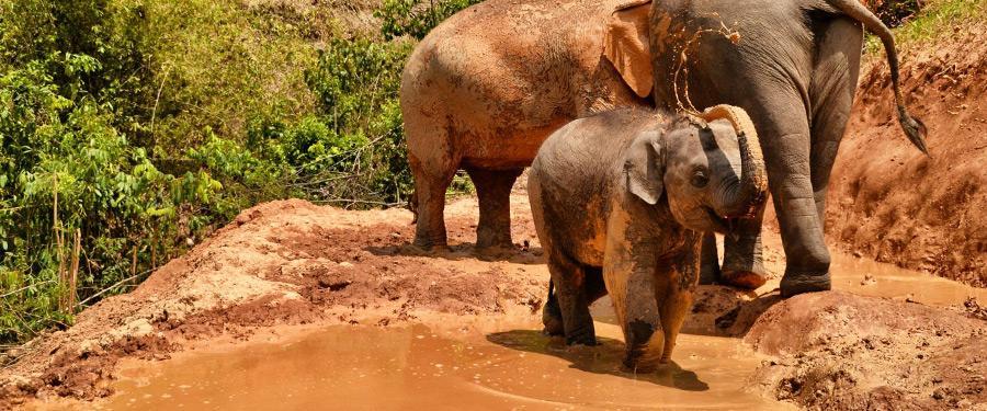 Kies voor ethisch olifantentoerisme in Chiang Mai. Vermijd om op de dieren te zitten of ze kunstjes te laten doen.