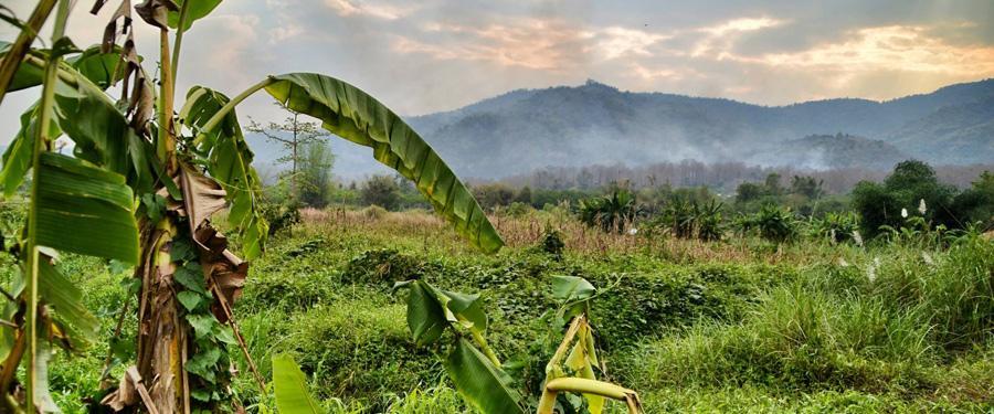 De prachtige natuur van Chiang rai.