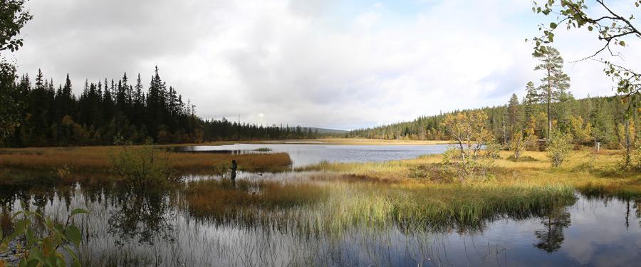 De scandinavische natuur kan maar moeilijk worden overtroffen! Myrflodammen in de zomer.