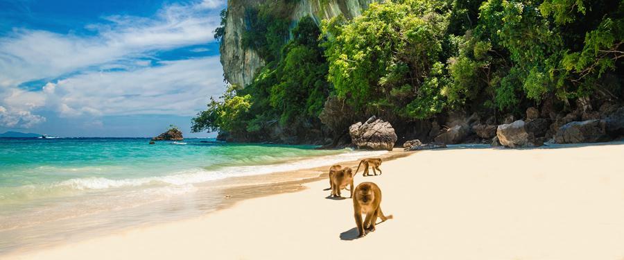 Ga wilde aapjes voederen op monkey beach!