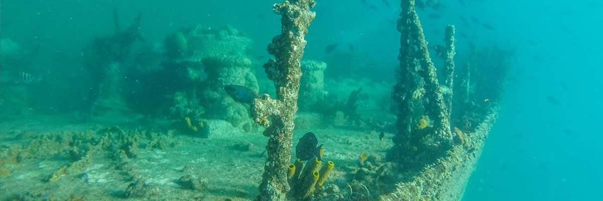 Snorkelen rond de SS Antila in Aruba.