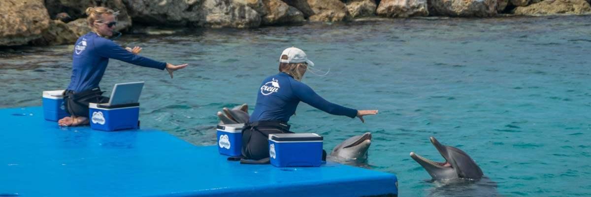 Trainers bereiden de dolfijnen voor in het Seaquarium van Curacao.