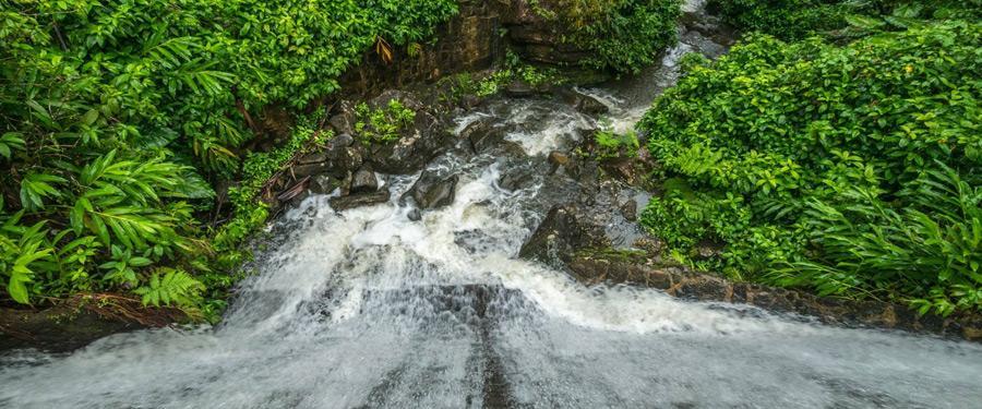 Het El Yunque regenwoud is een populaire daguitstap vanuit San Juan.