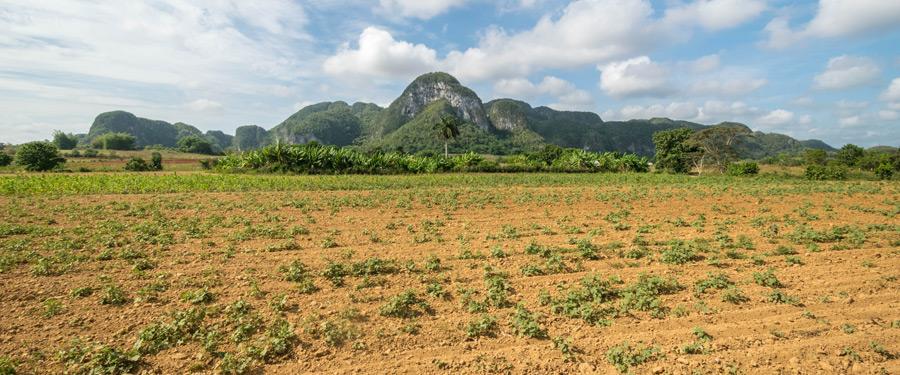 De Viñales valei in Cuba heeft prachtige landschappen en perfect voor te ontsnappen aan het drukke Havana.