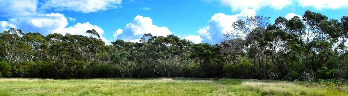 Het prachtige Royal National Park vlakbij Sydney.