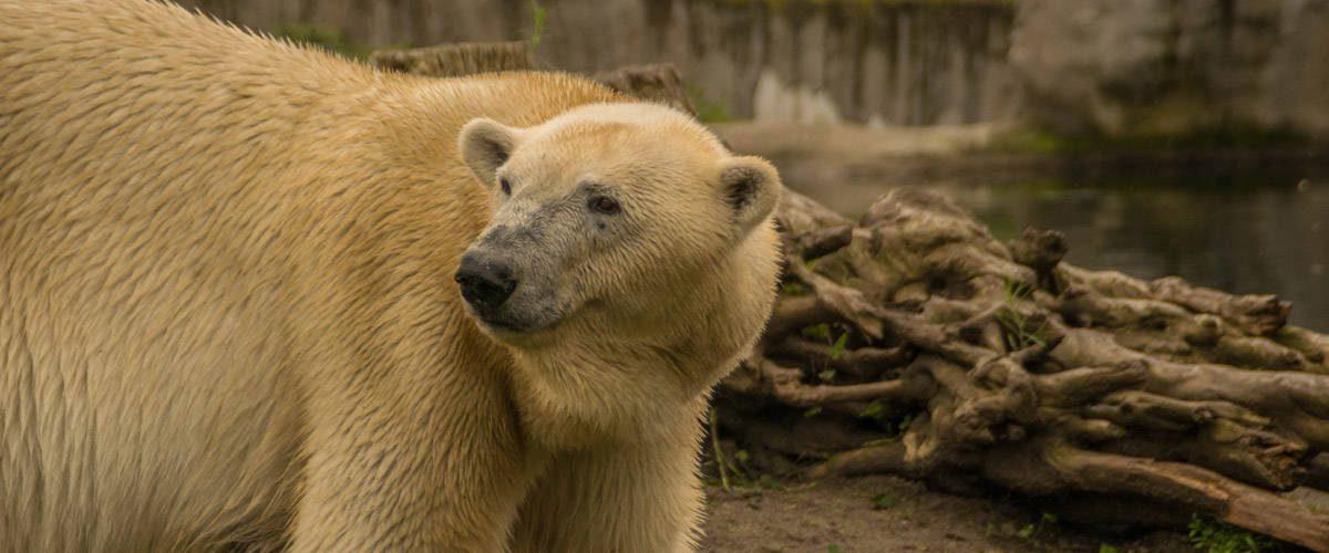 Een van de inwoners van de Diergaarde Blijdorp zoo in Rotterdam.