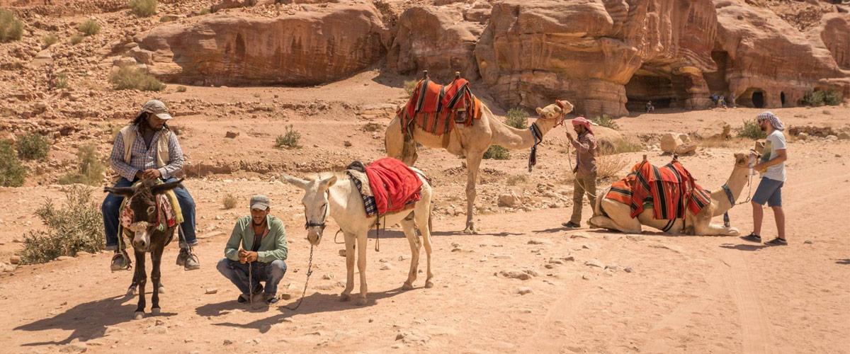 Kamelen en ezels zijn de favoriete vervoersmiddelen in Petra!