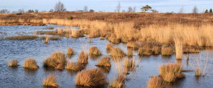 België heeft ook mooie natuur! De vele polders, duingebieden of andere beschermde natuurreservaten laten je tot rust komen.