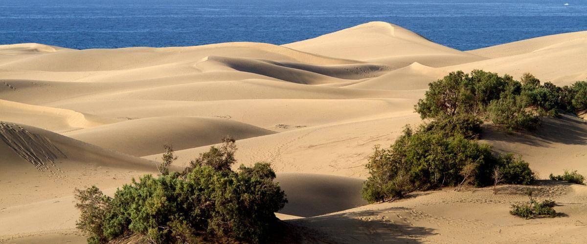 De duinen van Gran Canaria.