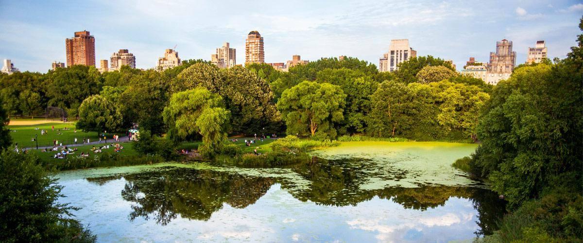 De groene long van New York: central park!