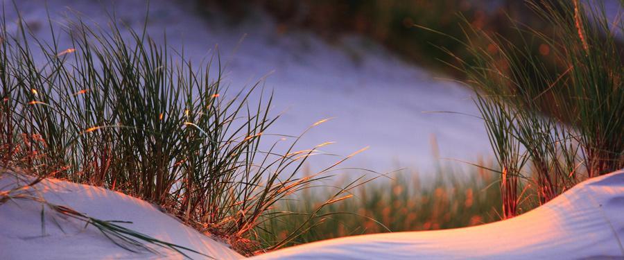 De Curonian Spit. Een prachtig stukje strand in Litouwen met de hoogste duinen van Europa.