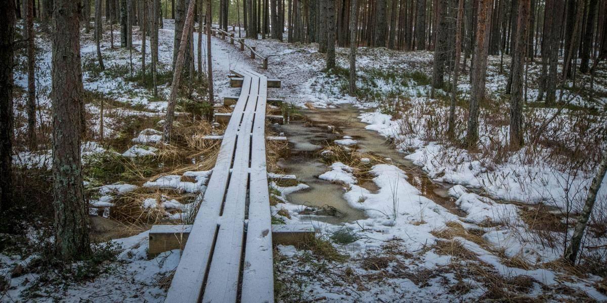 Het pad begint! Nog even doorstappen en je komt uit in het prachtige moeraslandschap.