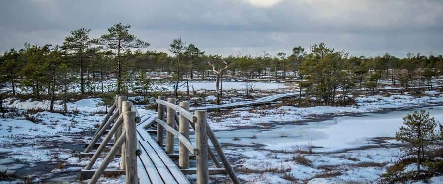 Een perfecte (halve)daguitstap vanuit Riga; het Kemeri nationaal Park. Moerassen van onvoorstelbare schoonheid!