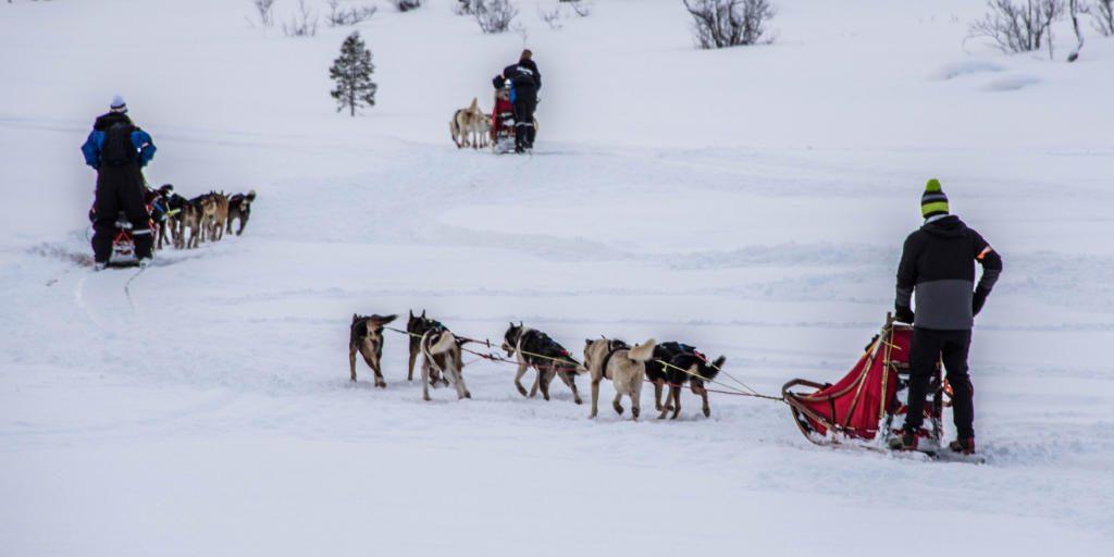 tromso husky safari noorwegen