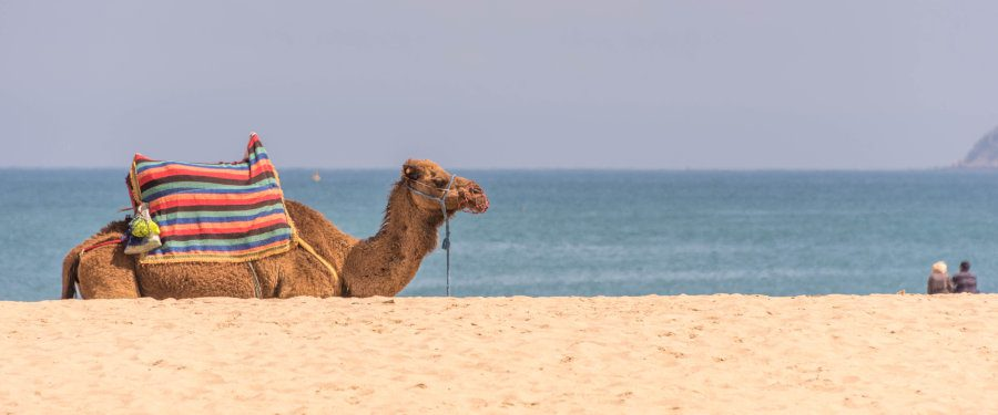 strand tangier kameel