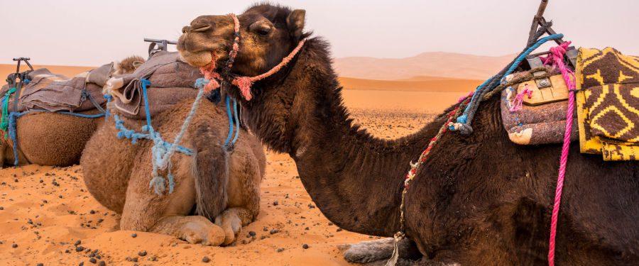 marrakesh sahara