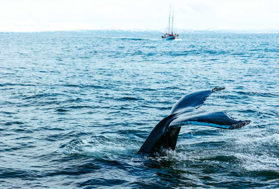 walvissen kijken noorwegen