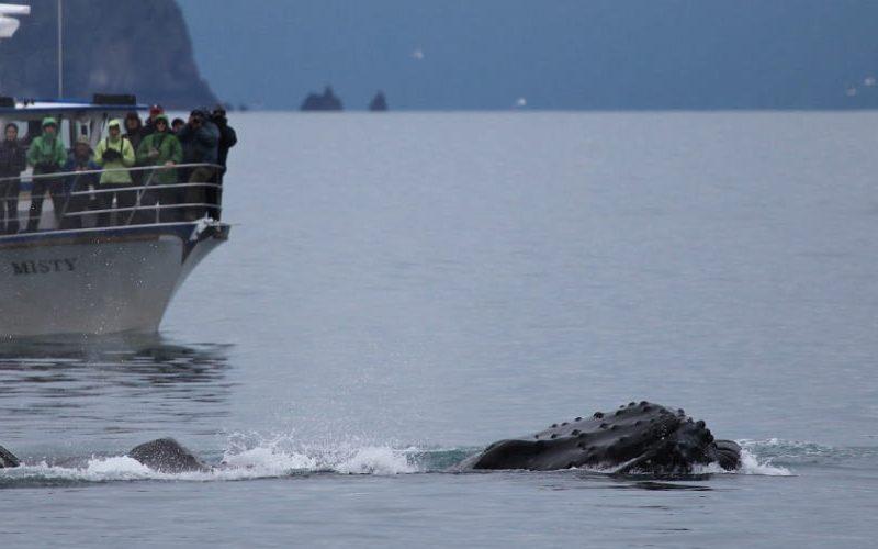 Walvissen Noorwegen