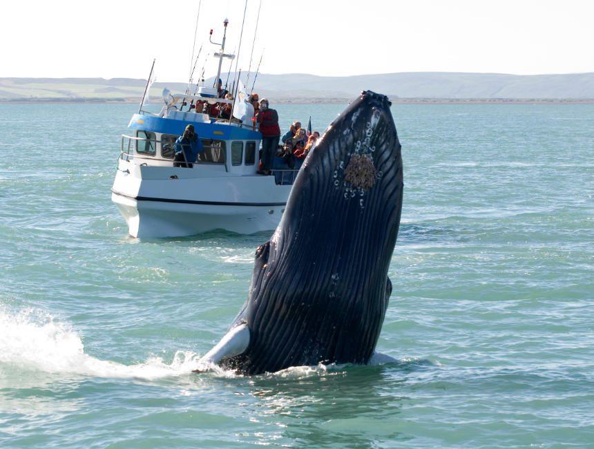 walvissen tour Noorwegen