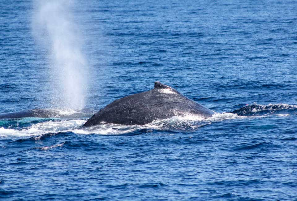 walvissen noorwegen zomer