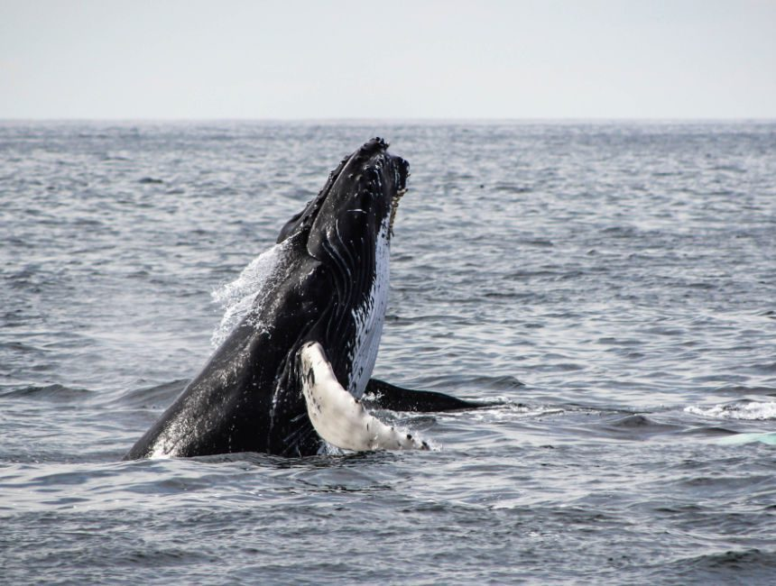 ijsland bezienswaardigheden walvissen