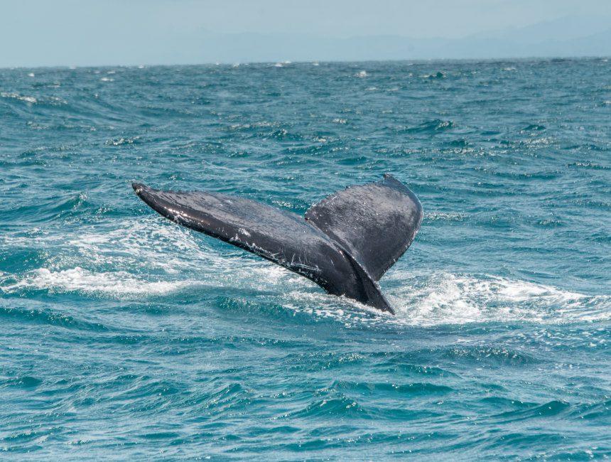 walvissen Dominicaanse Republiek bezienswaardigheden