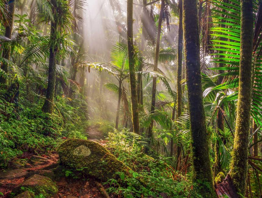 el yunque regenwoud dingen om te doen puerto rico