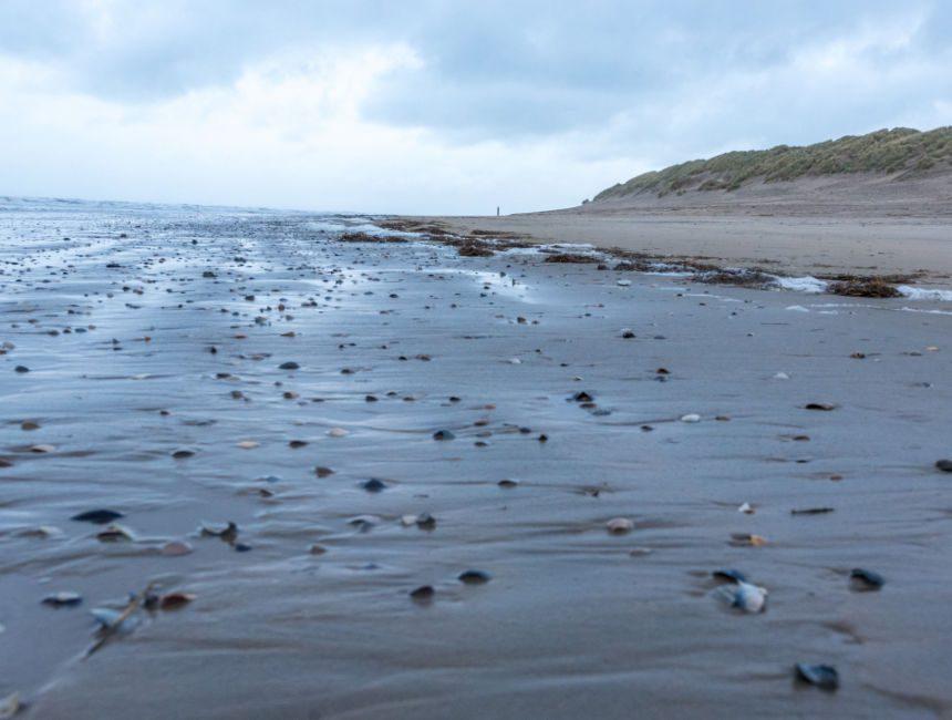 wandeling over de zeebodem ameland wandelen