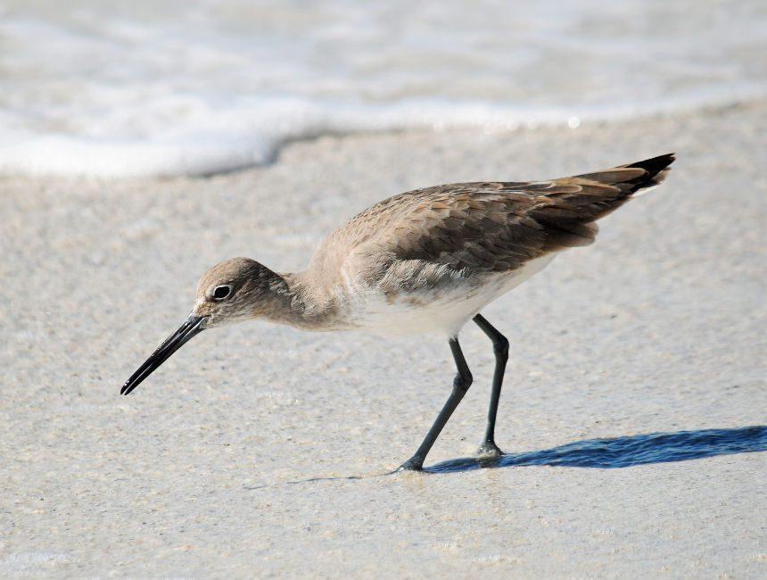 nationaal park schiermonnikoog vogels spotten