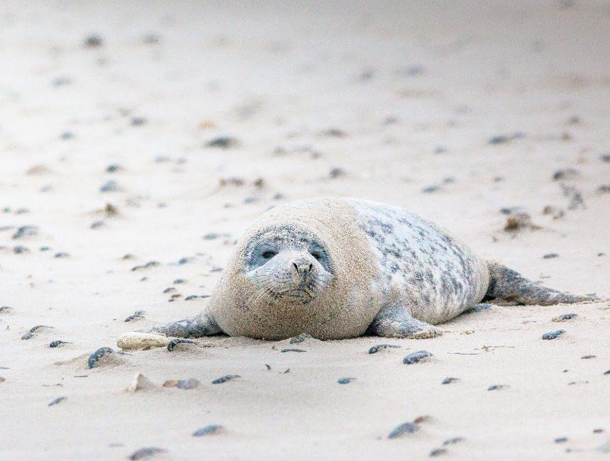 zeehonden nationaal park schiermonnikoog