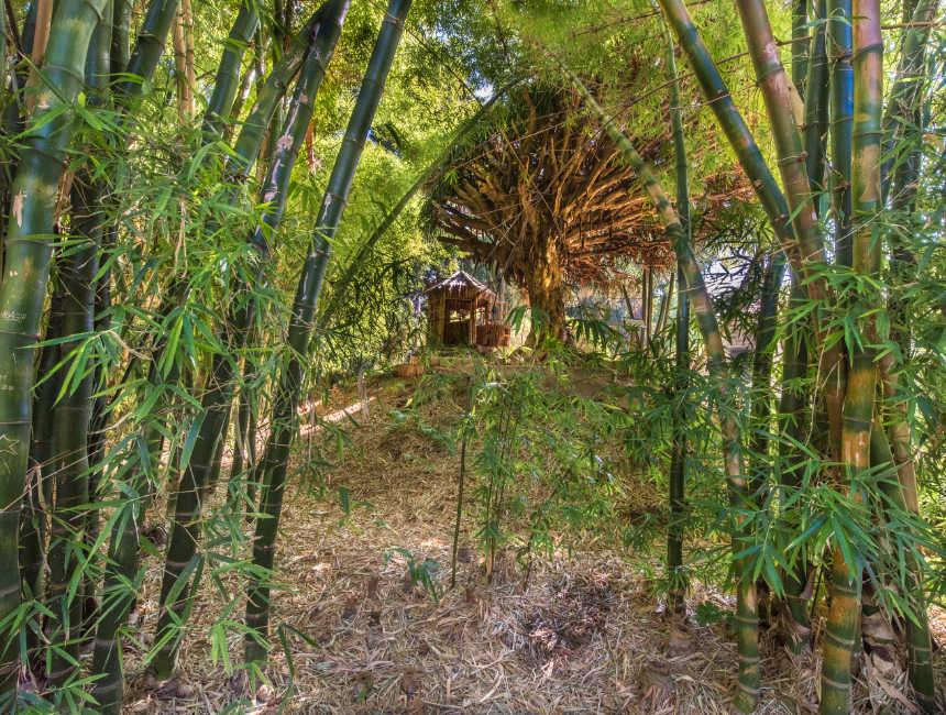orto botanico palermo botanische tuin