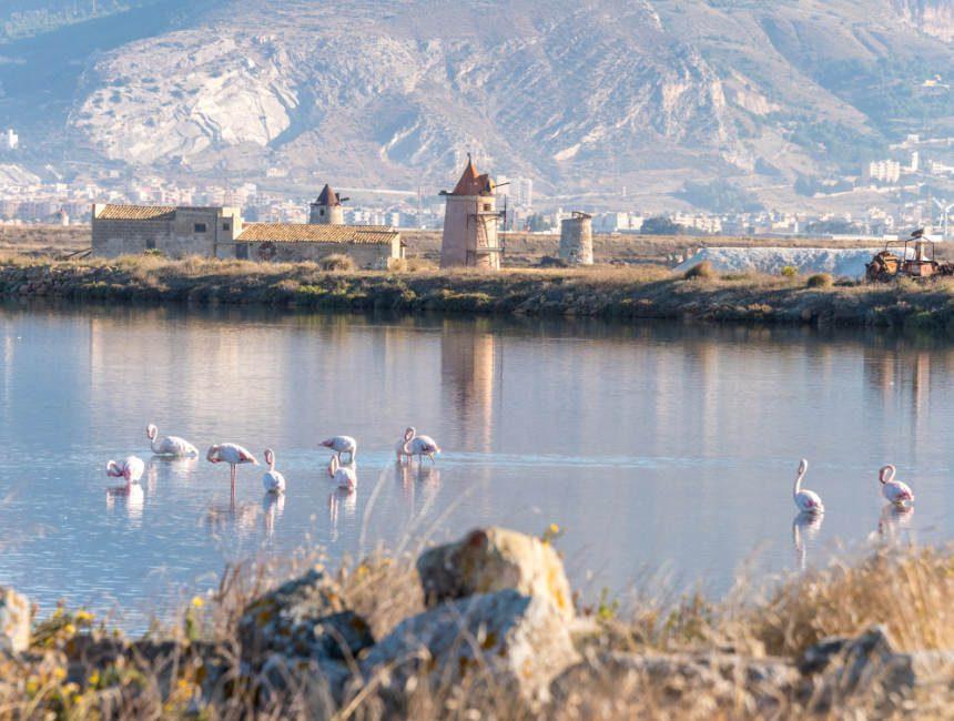 zoutpannen van trapani flamingo's