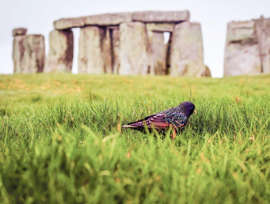 stonehenge bezoeken vanuit Londen
