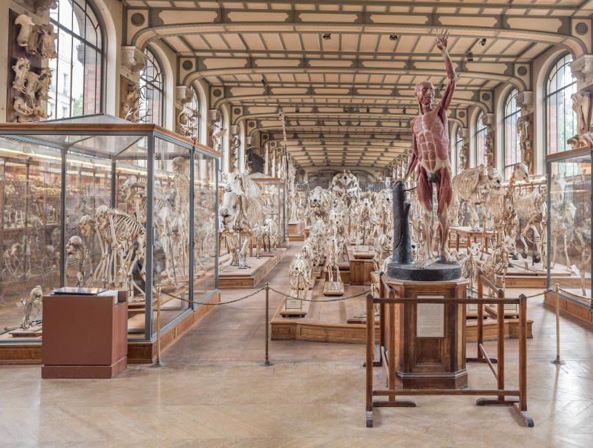 Grande Galerie de l'Évolution parijs