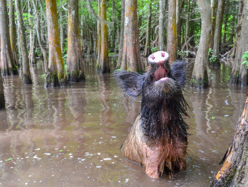 wilde varkens bayou new orleans bezienswaardigheden