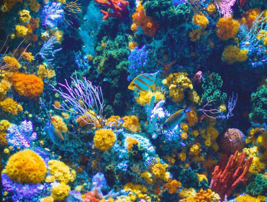 oceanarium lissabon dingen om te doen