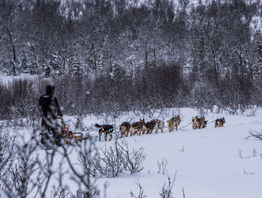 andere activiteiten hoge noorden husky slee noorderlicht