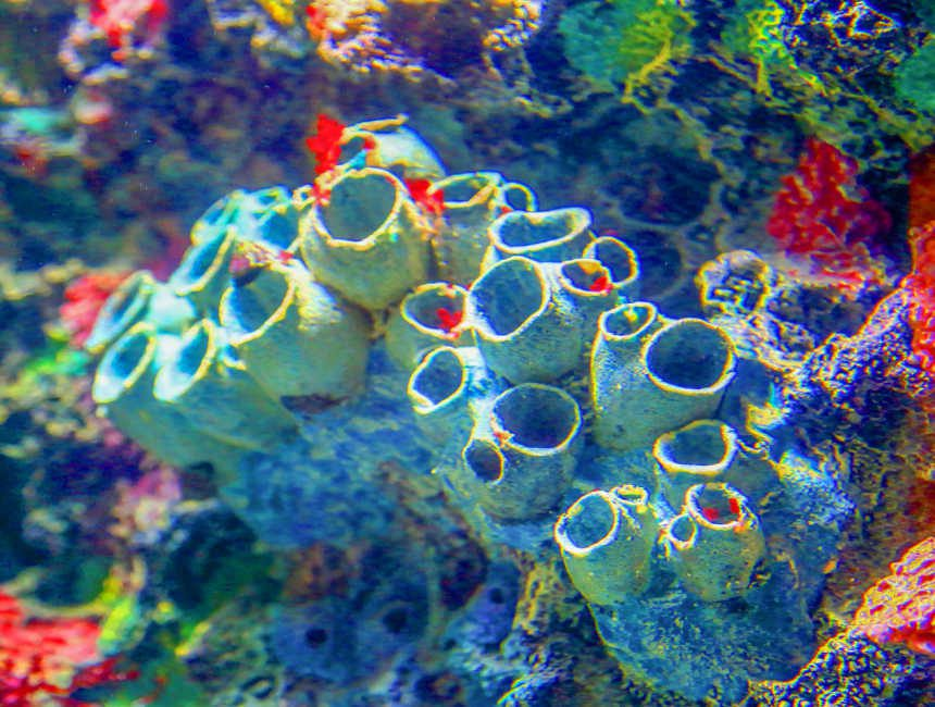 bezienswaardigheden miami john pennekamp coral reef state park