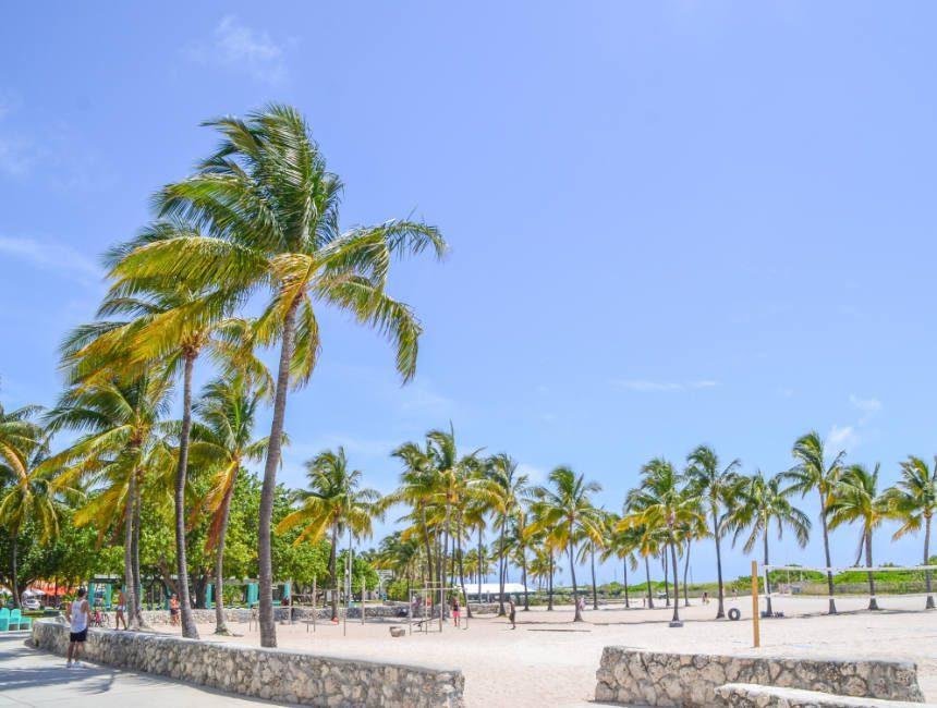 bezienswaardigheden miami beach palmbomen