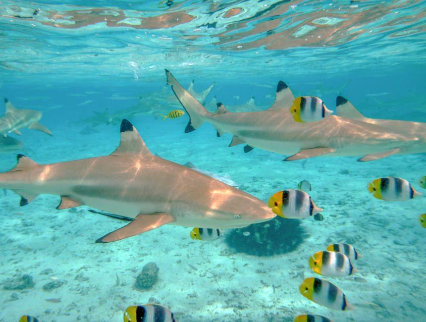 haaien leren duiken
