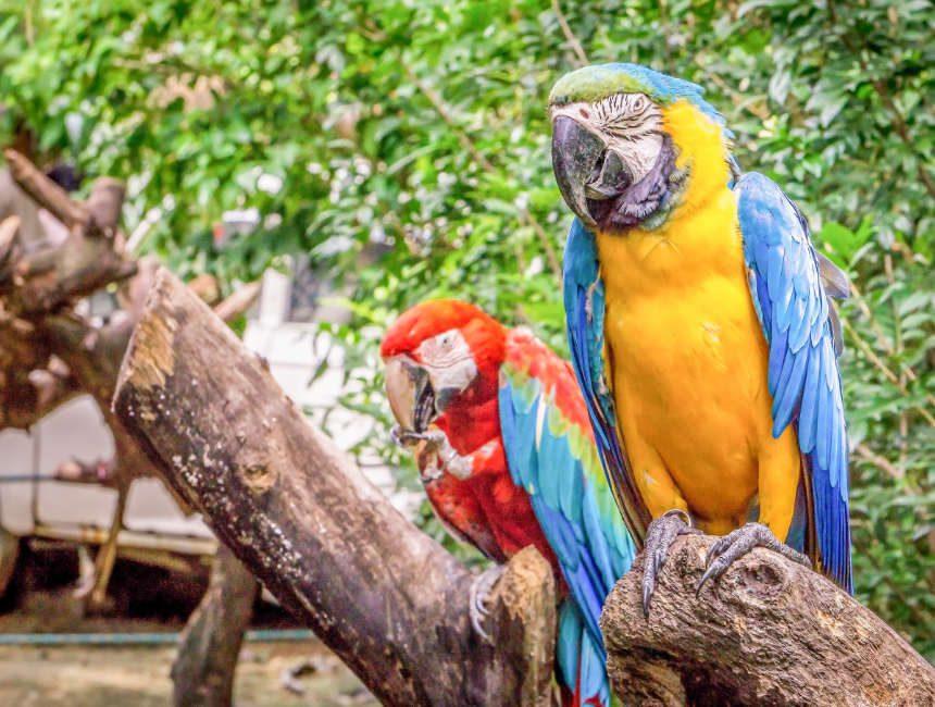 jungle island miami florida bezienswaardigheden