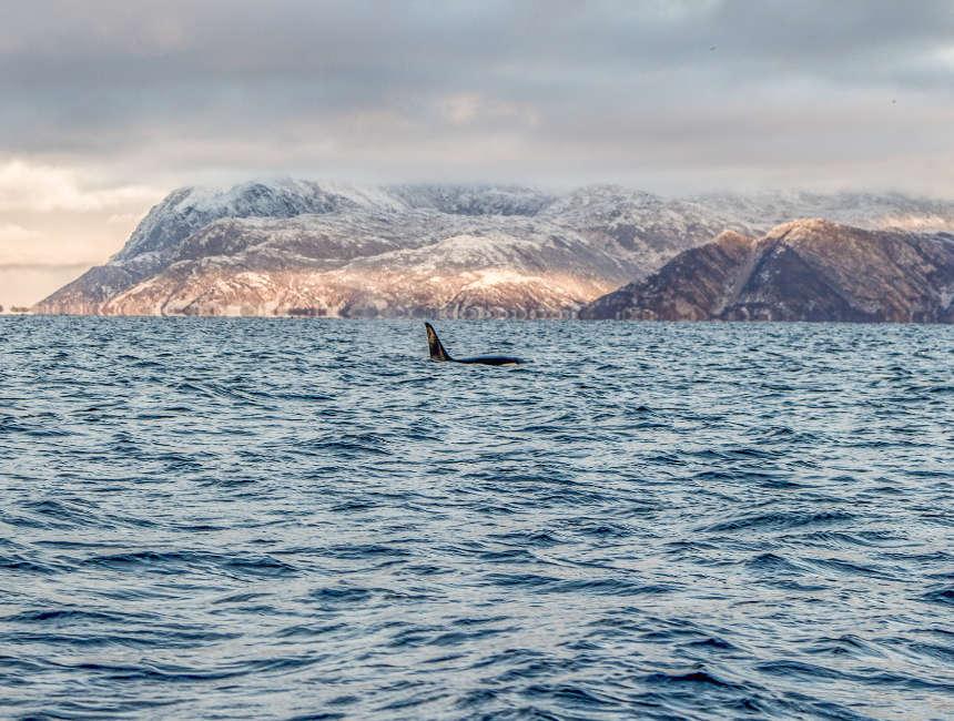 beste tijd walvissen ijsland