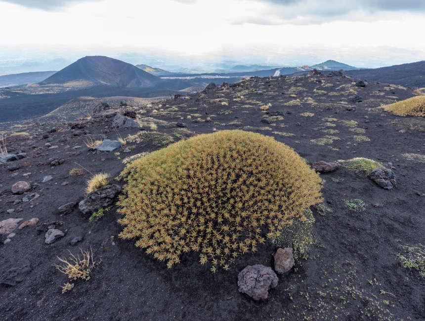 etna beklimmen vulkaanlandschap beplanting