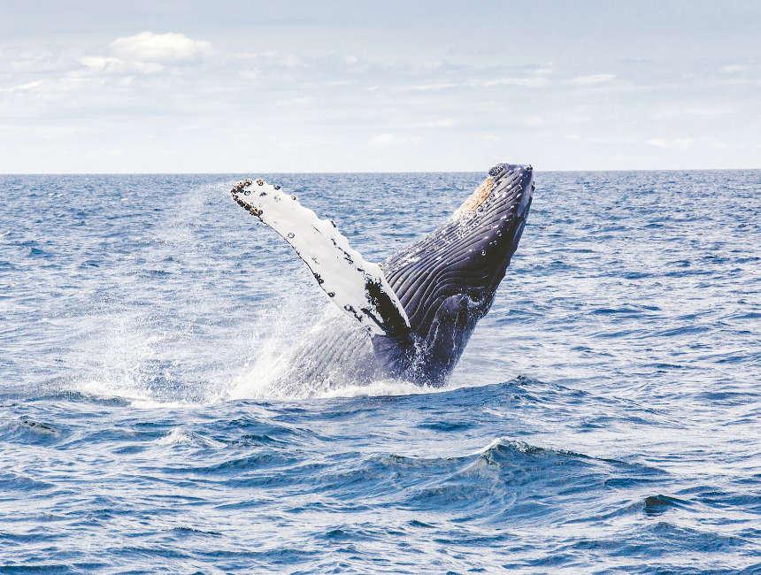 walvissen Ijsland Reykjavik
