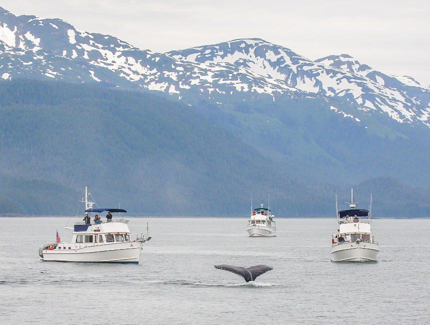 Walvissen kijken IJsland