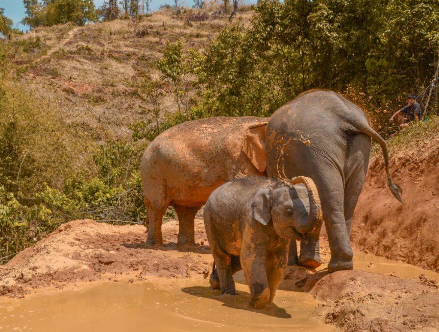 olifanten in Thailand