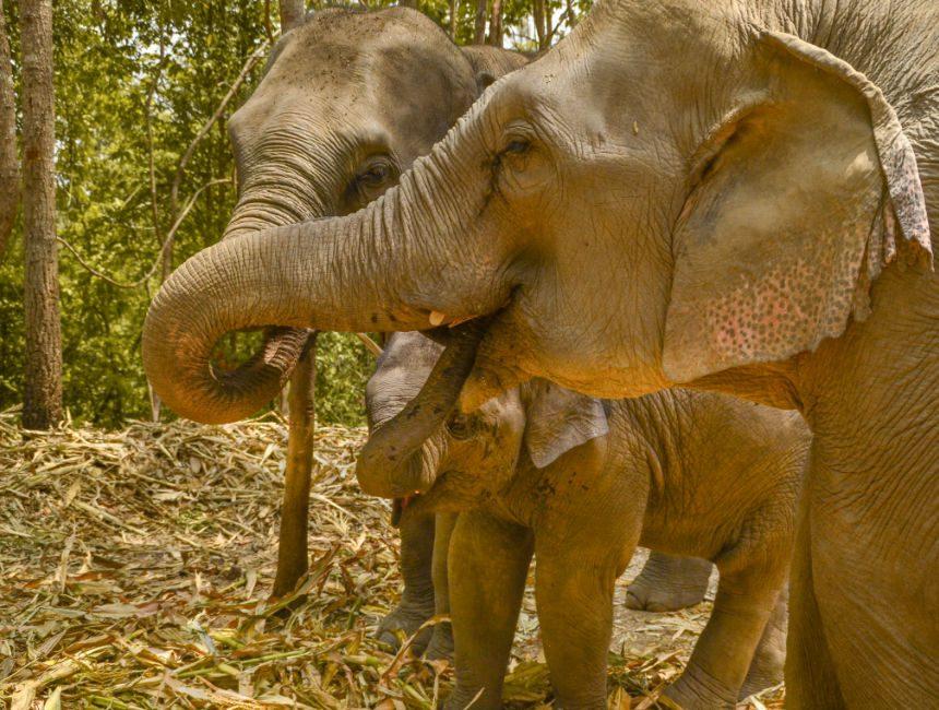 olifanten park thailand