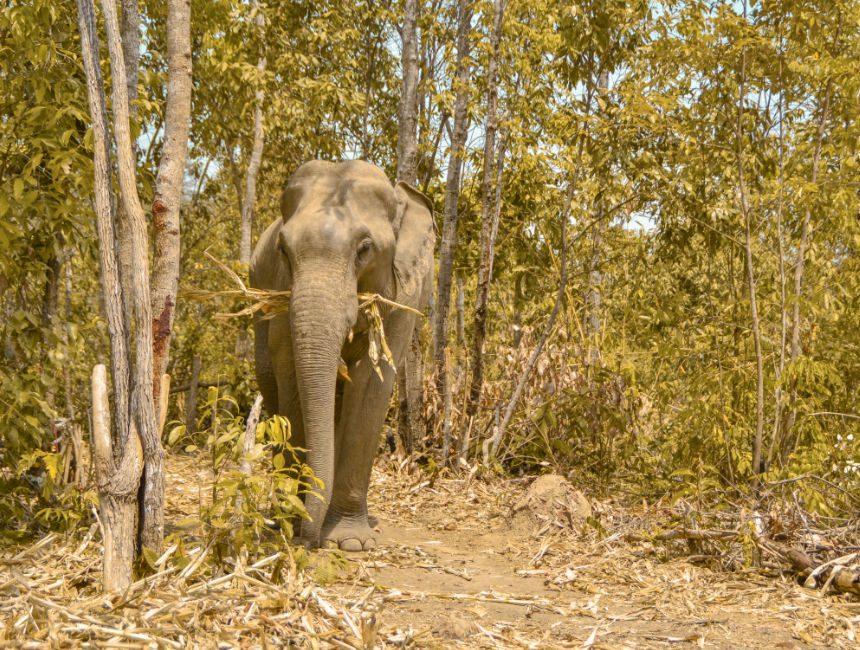 olifantenreservaat Thailand