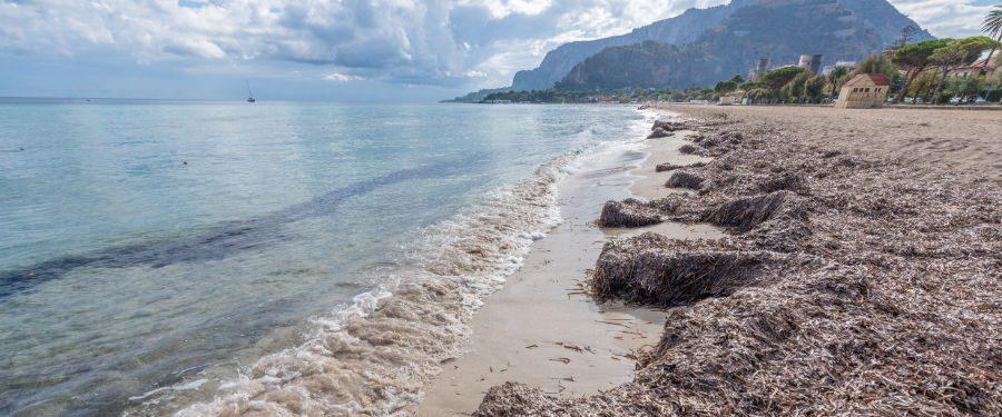 palermo stranden