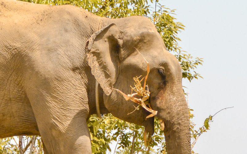 Thailand ethisch olifanten rijden